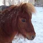 Facebooklogo för Storvreta Ponnyklubb