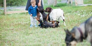 Facebooklogo för Storvreta hundrastgård